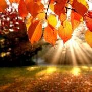 autumn-checklist
