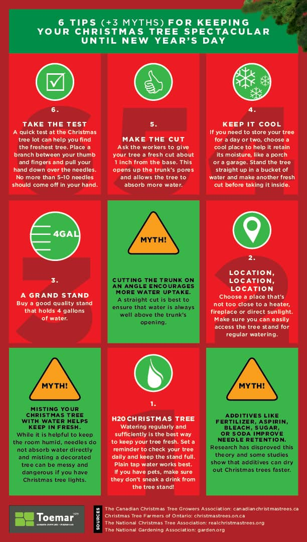 tips and myths to keeping your Christmas tree alive