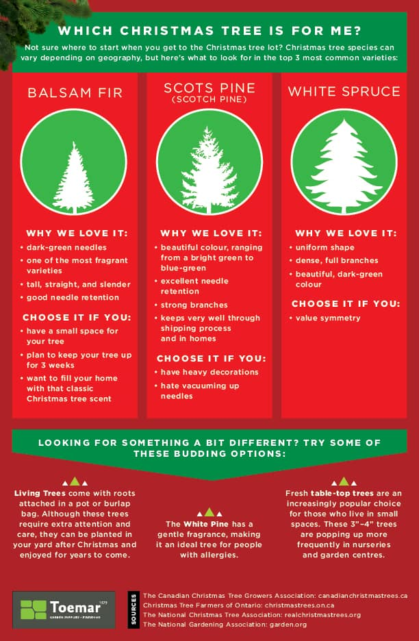 guide-to-selecting-the-right-christmas-tree