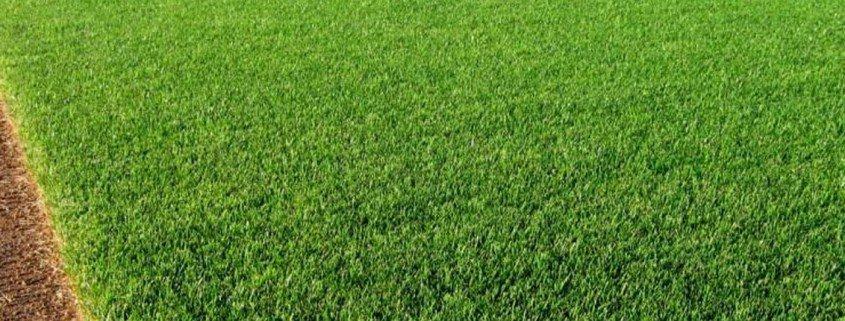 sod-grass
