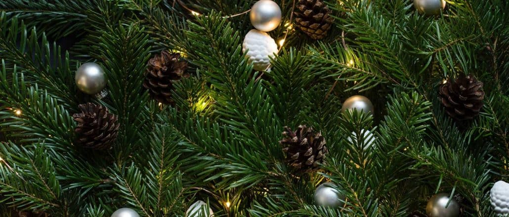 Type Of Christmas Trees.Different Types Of Christmas Trees Useful Pros Cons